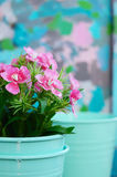 Flower in teal flower pot with copy space on colorful background Royalty Free Stock Photos