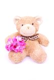 Flower teddy bear Stock Images