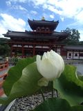 Flower and temple stock photos