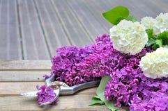 Flower on terrace Stock Images