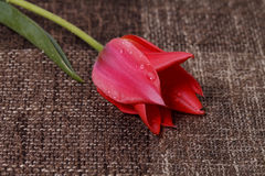 Flower on the texture background Stock Photos