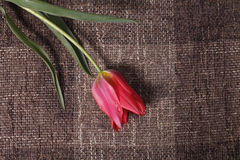 Flower on the texture background Royalty Free Stock Photography