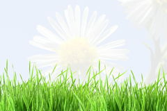 Flower texture and grass field background Royalty Free Stock Images
