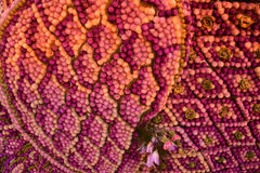Flower thai design Stock Image