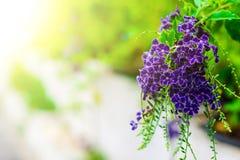Purple flowers are light down. Stock Image