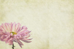 Flower Themed Paper Background Royalty Free Stock Photography
