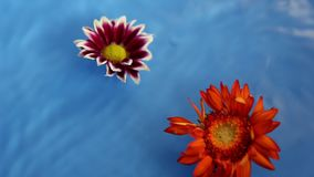 Flower therapy on the water stock footage