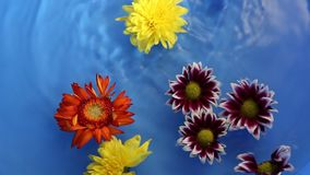 Flower therapy on the water stock video