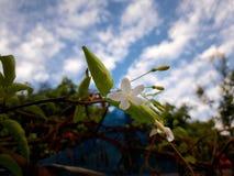 Flower. At Thungyen stock photography