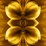 Flower tiles art illustration Royalty Free Stock Image