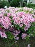 Flower in Tokyo Stock Image