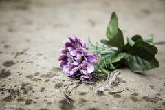 Flower in tomb Stock Photo