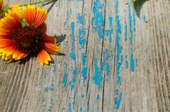Flower on top of an old wooden board Royalty Free Stock Photo