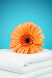 Flower and towels. Orange flower on a white towels Stock Photo