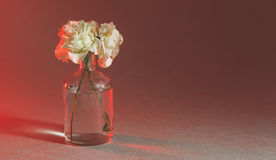 Flower in a transparent bowl Stock Photos
