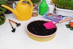 Transplanting indoor plants. Flower transplantation. Care of domestic plants. Still life Stock Image