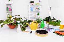 Transplanting indoor plants. Flower transplantation. Care of domestic plants. Still life Royalty Free Stock Images
