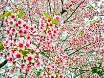 Flower tree Royalty Free Stock Photography