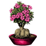 Flower tree adenium desert rose sketch vector. Flower tree adenium desert rose in a pot sketch vector graphics color picture Stock Images