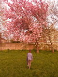 Flower tree. Boy looking at flower Royalty Free Stock Image