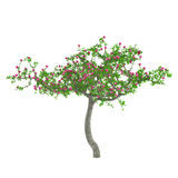 Flower tree. Decorative trees with pink flowers Royalty Free Stock Image