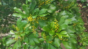 Flower  tree green. Yellow today best stock image