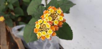 Flower. Tree nature beautiful royalty free stock image
