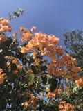 Flower tree stock images