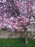 Flower tree. Pink beautiful flowers Royalty Free Stock Image