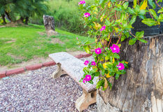 Flower and tree properly in garden. Beautiful flower and tree properly in garden and sunrise Stock Photography