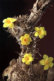Flower from tree root Stock Photos