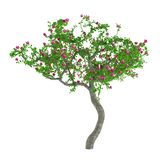 Flower trees. Decorative tree with pink flowers Stock Image