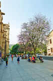 The flower trees and tourists Stock Photography