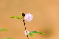 Flower. Trees unpresentable There are beautiful flowers Royalty Free Stock Images