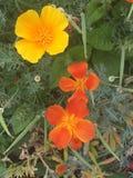 Flower trio Stock Photography