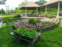 Flower trolley in tropical pink flower garden Stock Images