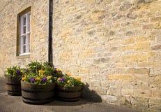 Flower tubs in the sun Stock Photos