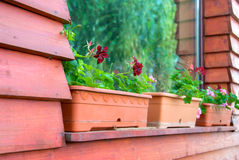 Flower tubs on window sill royalty free stock photos