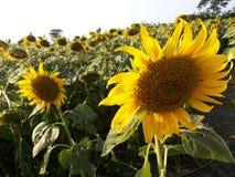 #Flower Tuin Royalty-vrije Stock Fotografie