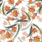 Yellow tulips bouquet of color pencil. Floral seamless pattern for design on a white background. Flower tulip background hand illustration color pencil plants Stock Photography
