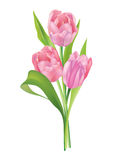 Flower tulip bouquet isolated on white background Royalty Free Stock Images