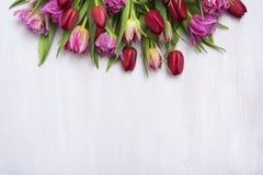 Flower, tulip header Royalty Free Stock Image