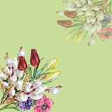 Bouquet First flowers of color pencil and watercolor. Floral illustration corner. Flower tulip willow background hand illustration color pencil watercolor Royalty Free Stock Photo