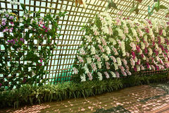 Flower tunnel Royalty Free Stock Photos