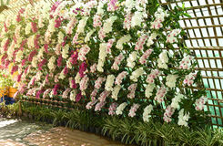 Flower tunnel Stock Photography