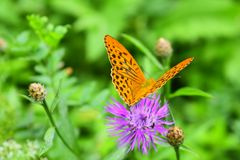 Butterfly. The flower, it turns out, also just yesterday blossomed. The flower, it turns out, also just yesterday blossomed. When he opened his eyes and wanted stock photos
