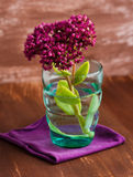 Flower in turquoise glass. Scarlet flower in turquoise glass Stock Image