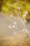 Flower ubon stock photography