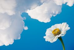Flower under clouds Royalty Free Stock Photo
