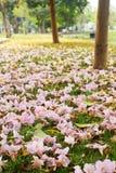 Flower under the tree Stock Photos
